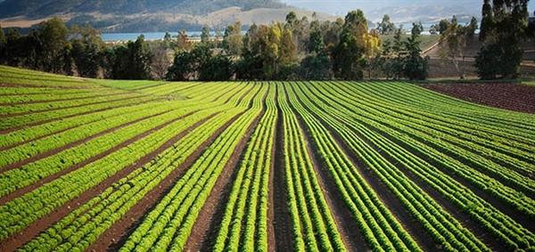 شرکت ریز افزایی گیاهی یاس